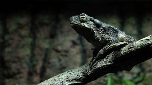 Thumbnail for Frog On A Branch
