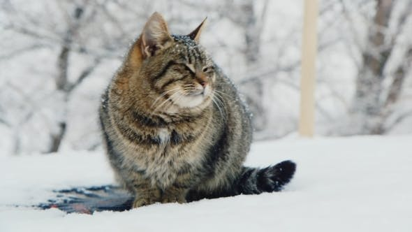 Thumbnail for Cat Meets The Winter