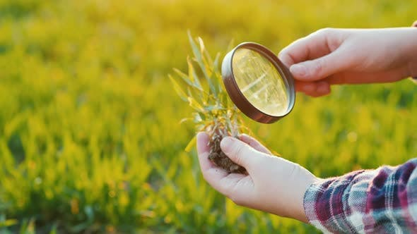 Thumbnail for Study Wheat Germ Through a Magnifying Glass. Research in Agribusiness