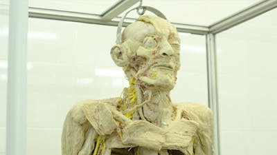 The Structure of the Human Body