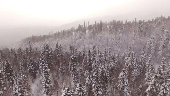 Thumbnail for Aerial View Flight Above Snow Winter Forest