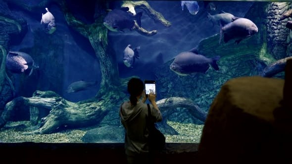 Thumbnail for Asian Girl Photographs a Huge Aquarium