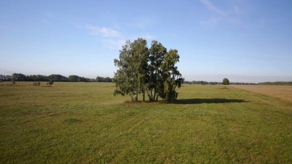 Thumbnail for Aerial: Flight Over Beautiful Green Tree At Golden Summer Field