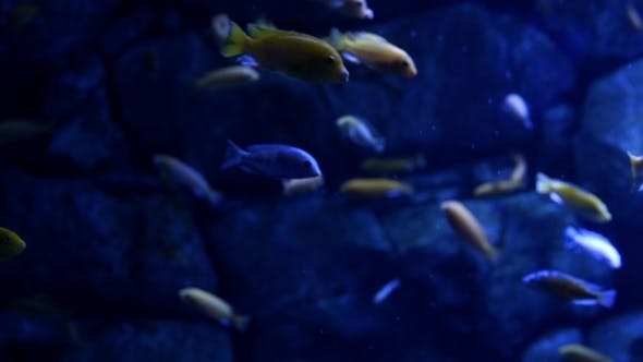 Thumbnail for Underwater Image Of Colorful Tropical Fish