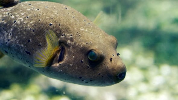 Thumbnail for Underwater Image Of Colorful Fish