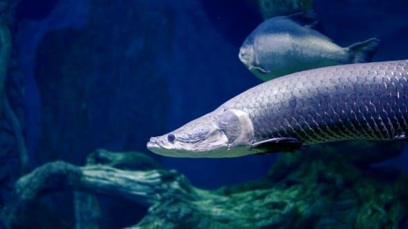 Thumbnail for Rear Fish In Oceanarium Enlighted Pool