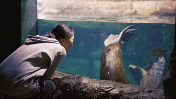 Thumbnail for Young Woman Observing Seals In Oceanarium