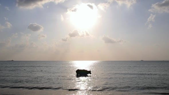 Buffalo Swimming In The Sea