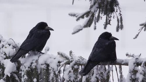 Oiseaux assis sur une branche enneigée