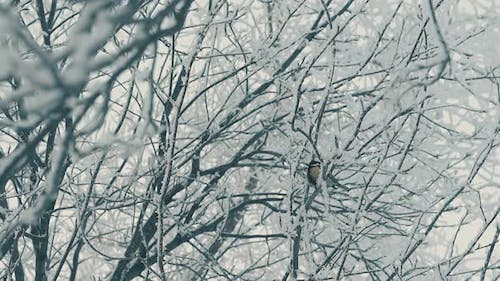 Tree Covered with Snow and Titmouse in Forest Slow Motion