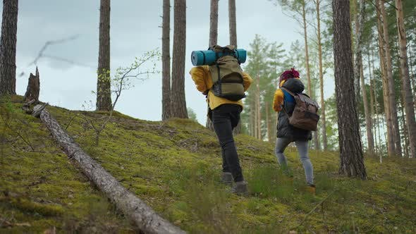 Two Africanamerican Travel Hikers with Backpack Walking While Looking the Landscape in the Forest
