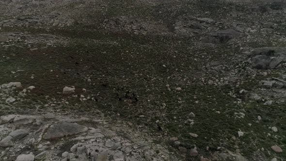 Thumbnail for Sheeps on Mountain