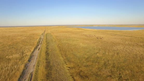Thumbnail for Aerial drone view of a herd of wildebeest wild animals in a safari in Africa plains