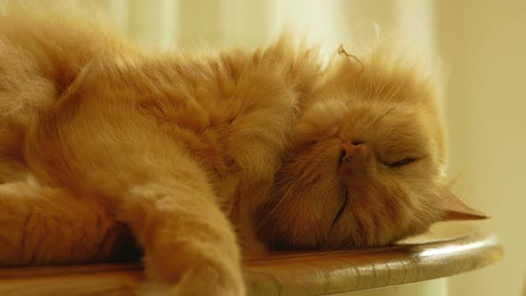 Thumbnail for Cat Sleepy