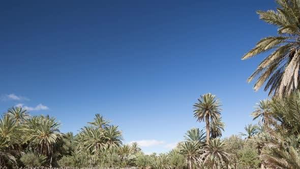 Oasis Palms03