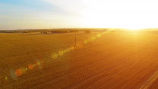 Thumbnail for Mid-air Flight Over Yellow Wheat Rural Field