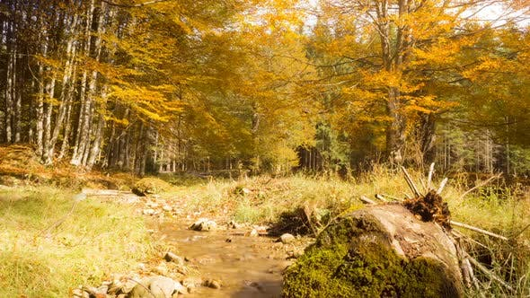 Thumbnail for Small Creek In Autumn Forest