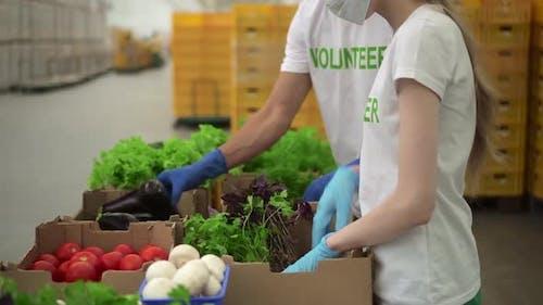 Frau und Mann packen frisches Gemüse für die Bedürftigen und Arbeiten in Agro Company Spbd ein