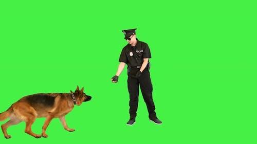 White Policeman Baits a Sheepdog with a Piece of Sugar on a Green Screen Chroma Key