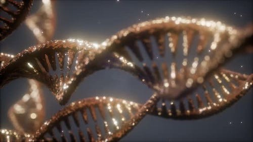 Double Helical Structure of Dna Strand Closeup Animation