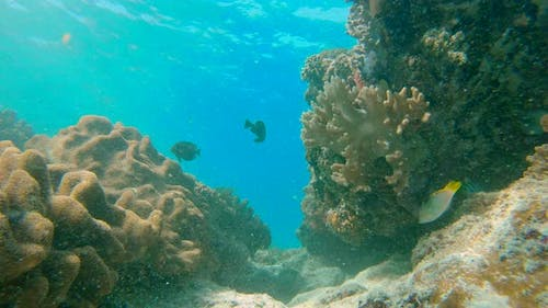 Young Men Snorkeling Exploring Underwater Coral Reef Landscape in the Deep Blue Ocean with Colorful