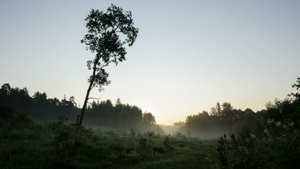 Thumbnail for Morning In The Forest With Mist Swirling Mist And The Sun Cut The Golden Rays