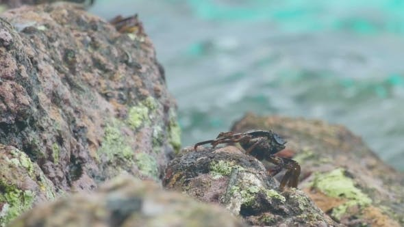 Cover Image for Crab And Rockskipper On The Rock At The Beach