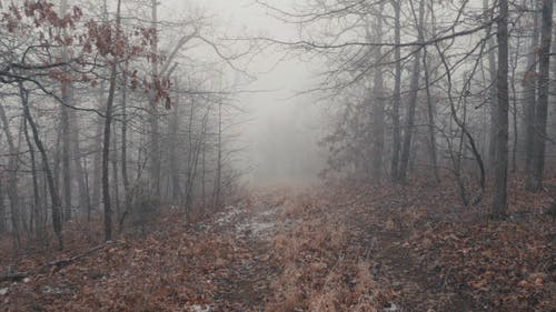 Scary and Cold Forest Trail