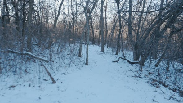 Thumbnail for Walking on Trail with Snow