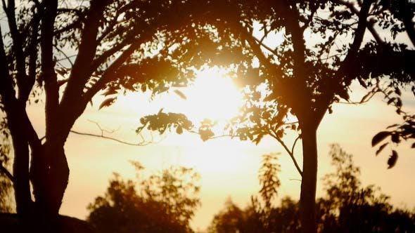 Tree In Morning