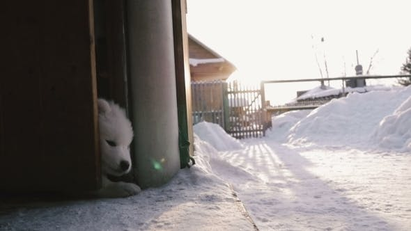 Thumbnail for Puppy Opened The Door And Ran Outside