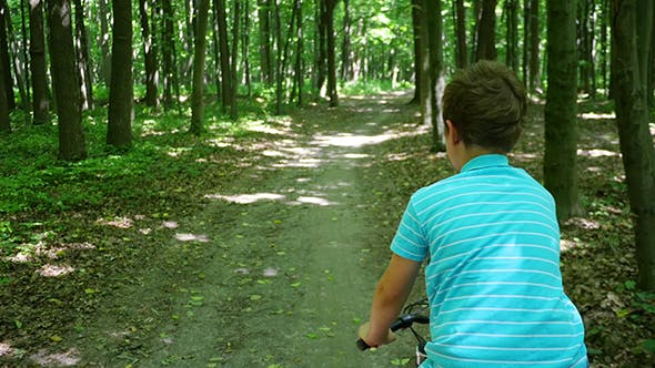 Thumbnail for Boy Biking on Forest Trails