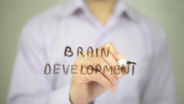 Cover Image for Brain Development