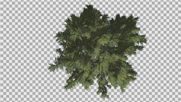 Fir Top Down Douglas Fir Strong Tree Summer Green