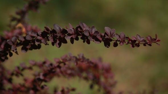 Thumbnail for Branch Of Flower On The Bush