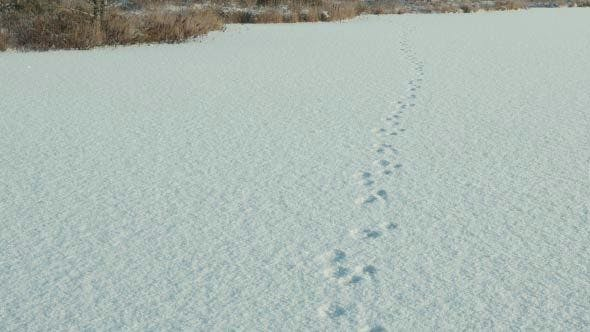 Thumbnail for Trail on the Snow Field