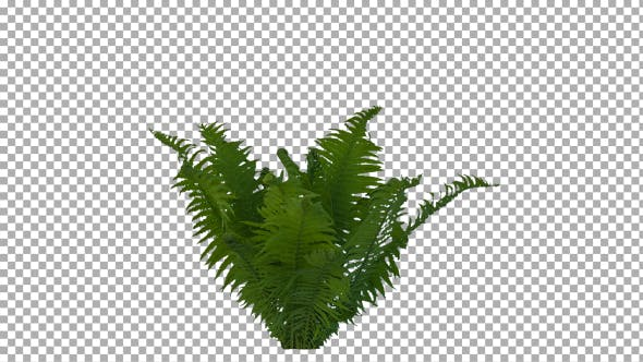 Cover Image for Real Fern Isolated on the Wind 2 (Strong Wind)