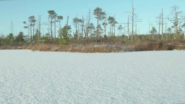 Winter Forest near the Frozen Lake