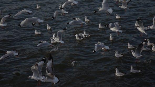 Thumbnail for Flock Of Seagulls Flying