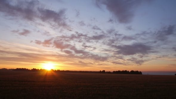 Thumbnail for Aerial Rising Up From Wheat Field Towards The Sun