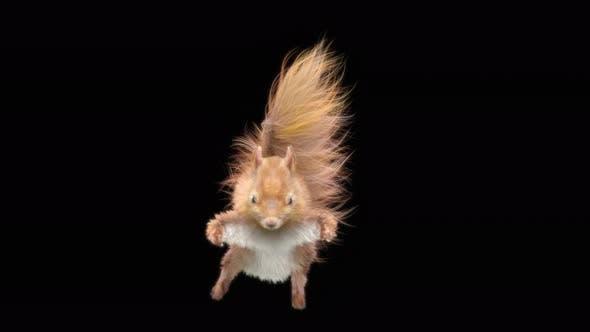 Squirrel Fly 4K