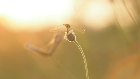 Dragonfly In Nature