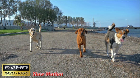 Thumbnail for Three Dogs Running