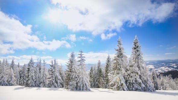 Thumbnail for A Strong Winter Sun