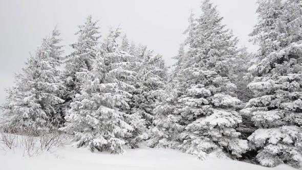 Thumbnail for Winter Smow