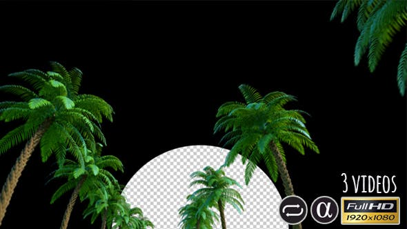 Thumbnail for Moving Palms - 3 Pack