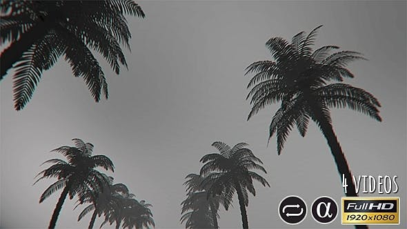 Thumbnail for Bottom View Of The Palm Trees - 4 Pack