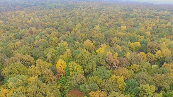 Thumbnail for Aerial View Autumn Forest