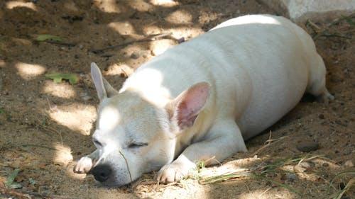 Dog Sleeping Under Tree