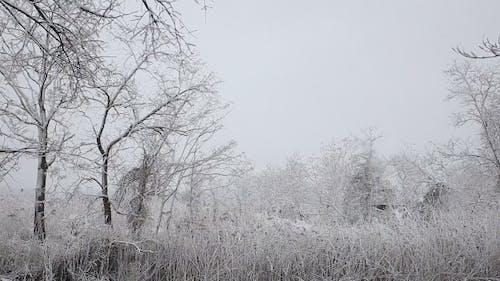 Snow Storm Snowstorm Winter